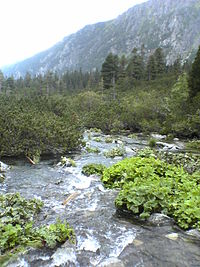 Krupa Creek in Tatras.JPG