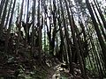 Kumano Kodo forest.jpg