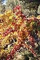 L'automne au Castellet - 04.jpg