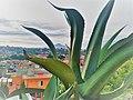 La Malinche desde San Hipólito Chimalpa, Tlaxcala.jpg