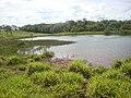 Lagoa em Fazenda MS - panoramio.jpg