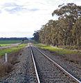 Lake Cargelligo railway line near Temora (1).jpg