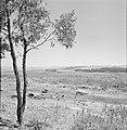 Landschap in de omgeving van Latrun, op de voorgrond een jonge boom en rotsblokk, Bestanddeelnr 255-3208.jpg