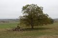Lauterbach Frischborn Eisenbach Quercus Pastures Coarse woody debris Autumn Baronenweg E 4.png