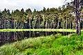 Leśny staw - panoramio (6).jpg