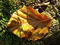 Leaf (233950021).jpeg