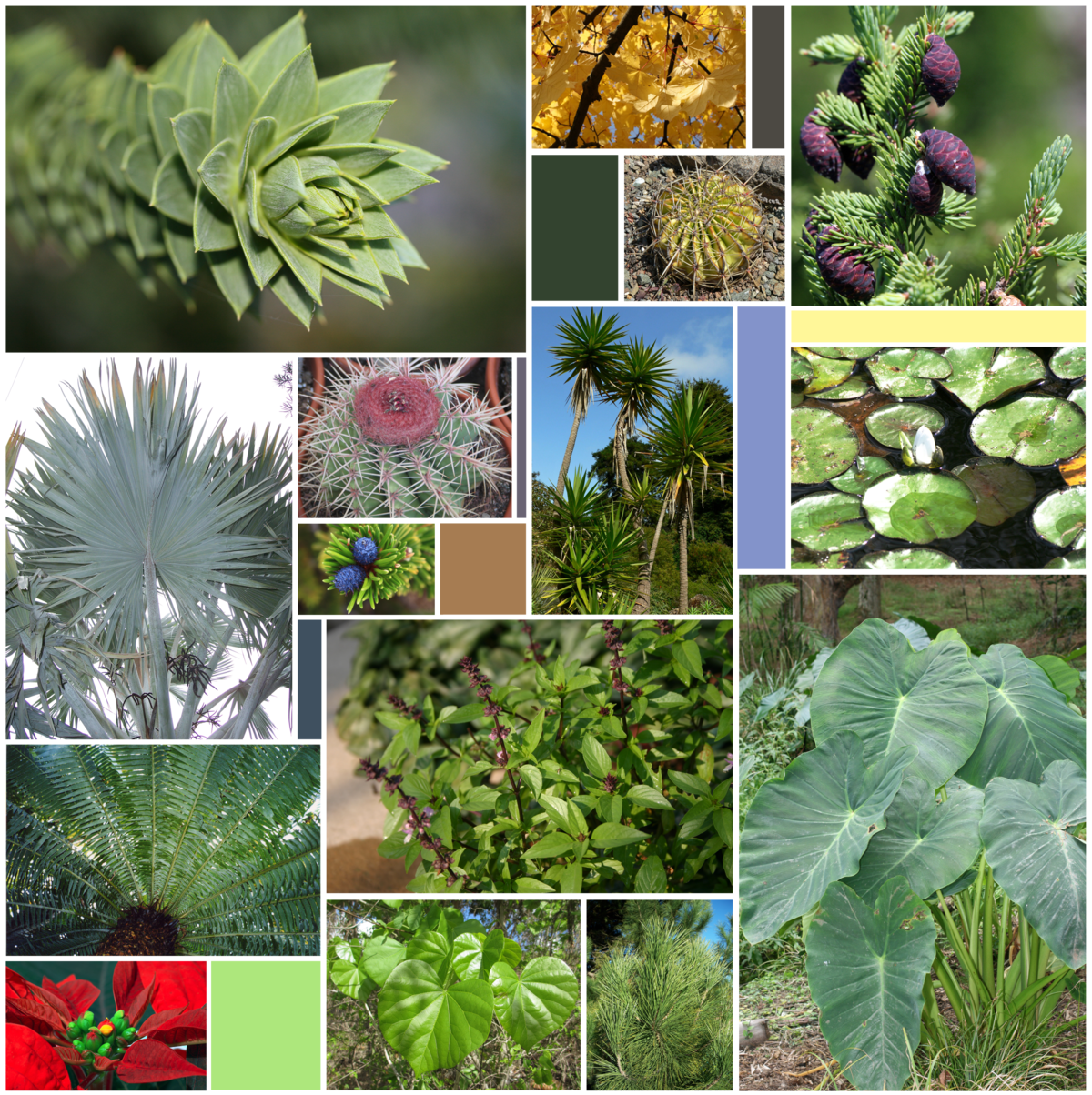 Which plants have leaves in the form of plates