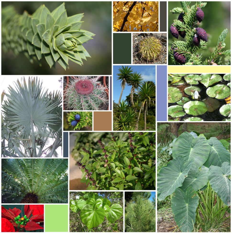 Leaf Varieties (15 sp)