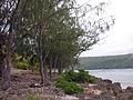 Lelepa shore, Vanuatu, 2006 - Flickr - PhillipC.jpg