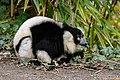 Lemur (26992592928).jpg