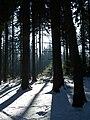 Licht und Schatten Winterwald.JPG