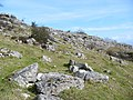 Limestone crags on Hampsfell - geograph.org.uk - 354847.jpg