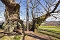 Linde-Reinborn-JR-E-5009-2021-04-24.jpg
