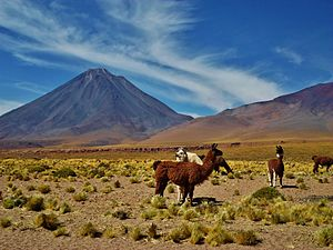 Licancabur - Llamas and vegetation in front of Licancabur