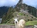 Llamas en Machu Picchu - 3.jpg