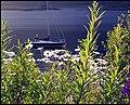 Loch Leven, Glen Coe. - panoramio.jpg