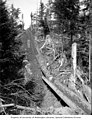 Logging operation showing logs descending a logging chute, ca 1903 (INDOCC 646).jpg