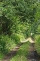 Longwood drove - panoramio.jpg