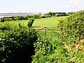 Looking towards the sea - geograph.org.uk - 807163.jpg