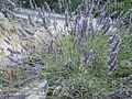 Lorto-botanico-di-padova-2016 27757185784 o 39.jpg