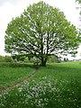 Losheim am See - panoramio (6).jpg