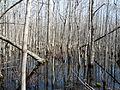 Louisiana Purchase State Park 005.jpg