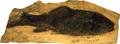 LucyprinusLinchiiensis-BeijingMuseumOfNaturalHistory-May23-08.png