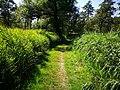 Lundener Niederung 2019 Naturschutzgebiet S-H Weg.jpg