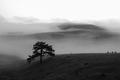 Magla na Zlatiboru.png
