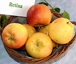 Malus-Retina.jpg