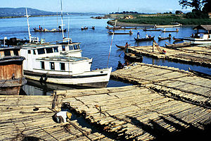 Irrawaddy River - Pulling teak logs, made into large rafts and floated down the Irrawaddy River, ashore near Mandalay.