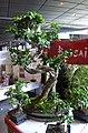 Mang'Azur - 2009 - Espace Culturel - Bonzai - P1030589.jpg