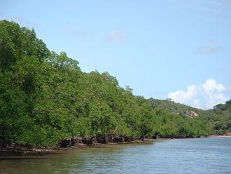 Sirinhaém - Mangroves at Sirinhaém