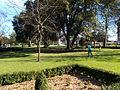 Manor Park, Sutton, Surrey, Greater London trees (2).jpg
