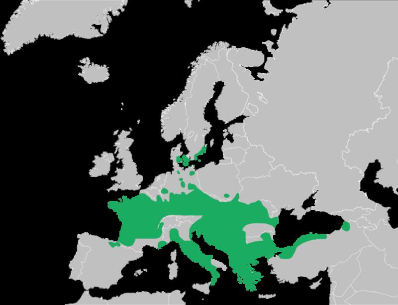 Mapa Rana dalmatina.png