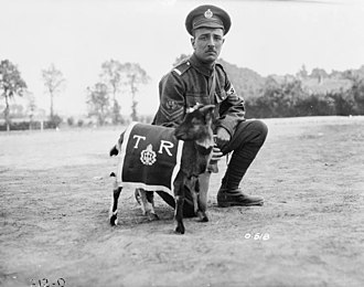 3rd Battalion (Toronto Regiment), CEF - The mascot of the 3rd Canadian Infantry Battalion, August 1916