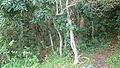 Mauritian forest (8132012112).jpg