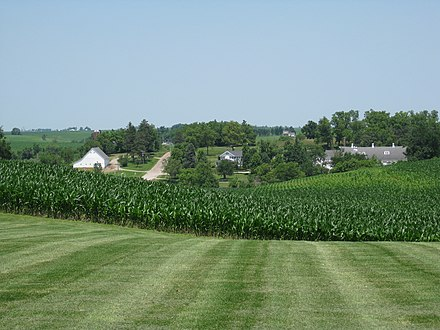 Central Iowa cornfield and dairy in June. Maytag.jpg
