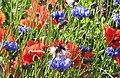 Meadow flowers (747906774).jpg