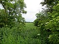 Meadows in the Nene Valley - May 2014 - panoramio.jpg