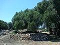 Minorque Talati Dalt Petit Talaiot - panoramio.jpg