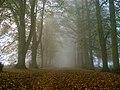 Misty melancholy.jpg
