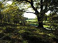 Mixed woodland - geograph.org.uk - 1538861.jpg