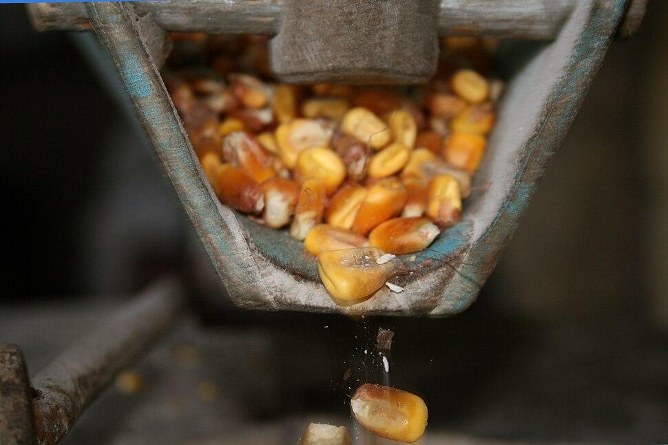 Moendo millo, Rianxo, Galiza