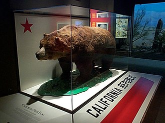 California grizzly bear - Monarch, a preserved specimen, on display at the California Academy of Sciences.