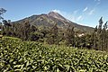 Mount Merapi 2017-08-02 (36283047821).jpg