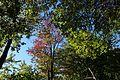 Mount Royal @ Ville-Marie @ Montreal (29783062243).jpg