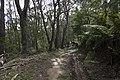 Mount Wilson NSW 2786, Australia - panoramio (29).jpg