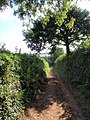 Mouseberry Lane - geograph.org.uk - 987025.jpg