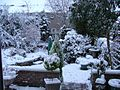 My Garden in winter - panoramio.jpg